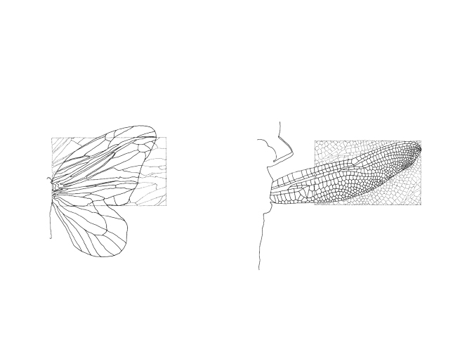 287_butterfly_dragonfly_sketch